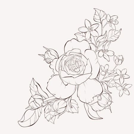 Fiore di rosa vettoriale con fiori selvatici. Elemento per il design. Linee di contorno e tratti disegnati a mano. Perfetto per biglietti di auguri di sfondo e inviti di matrimonio, compleanno, San Valentino, festa della mamma. Vettoriali