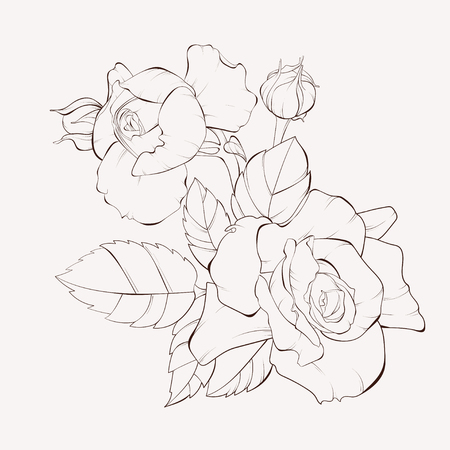 Vector rose flower. Element for design. Hand-drawn contour lines and strokes. Perfect for background greeting cards and invitations of the wedding, birthday, Valentine's Day, Mother's Day. Illustration