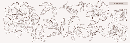 Sketch Floral Botany Collection. Vector peony flower Peony flower and leaves drawing. Vector hand drawn engraved floral set. Botanical rose, branch and berry Black ink sketch. Great for tattoo, invitations, greeting cards, decor. Vettoriali