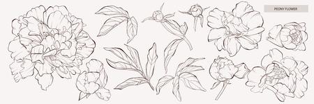 Skizzieren Sie Blumenbotanik-Sammlung. Vektor-Pfingstrose-Blume Pfingstrose-Blume und Blätter zeichnen. Vektor handgezeichneten gravierten Blumensatz. Botanische Rose, Zweig und Beere Skizze mit schwarzer Tinte. Ideal für Tattoo, Einladungen, Grußkarten, Dekor.