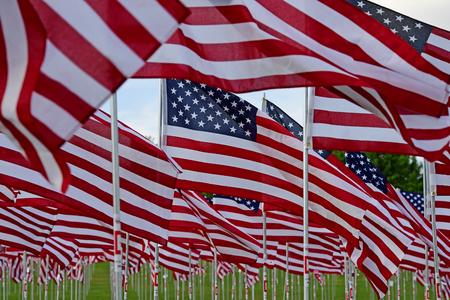 Field of American Flags Banco de Imagens