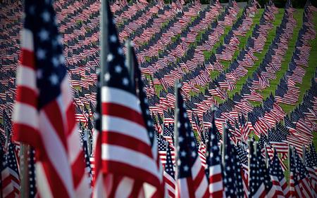 Field of American Flags Stockfoto