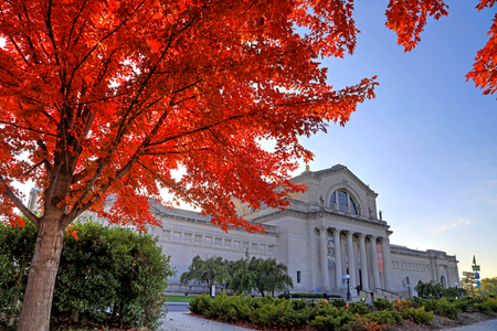 St. Louis, Missouri - Nov. 3, 2017 - Fall foliage around the St. Louis Art Museum on Art Hill in Forest Park, St. Louis, Missouri.