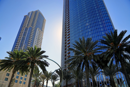 Palm trees in downtown San Diego, California