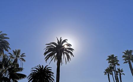 The sun passing behind a palm tree.