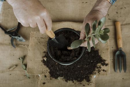 Flugzeug von oben, das eine Pflanze manipuliert