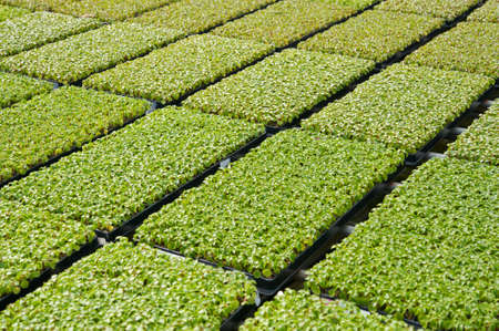 seeding: Close-up of plants growing in a nursery Stock Photo