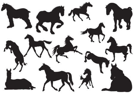 steed: Silhouette of horse, vector, illustration Illustration
