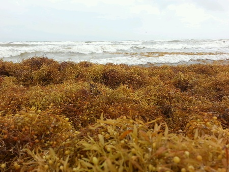 Close up of seaweed pile on beach
