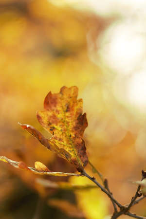 nervure: Hojas en luz del oto�o