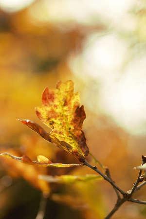 nervure: Leaves in autumn light Stock Photo