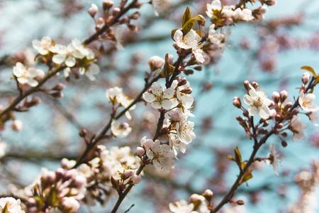 봄 벚꽃 스톡 콘텐츠 - 9244538