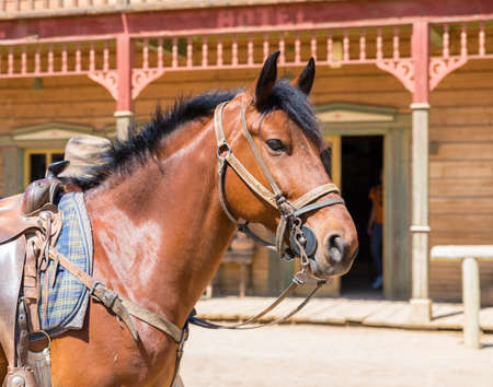 Working horse with blinders