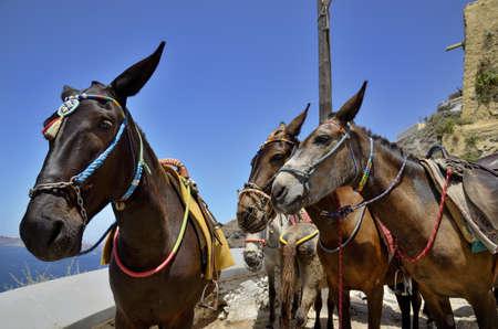 insolaci�n: Un grupo de burros est� a la espera para los turistas para subir a la aldea