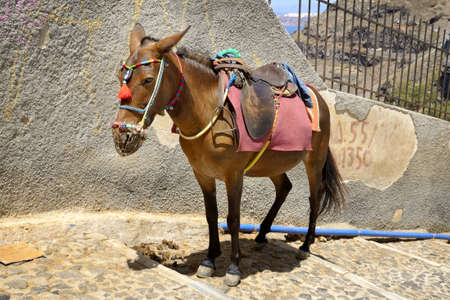 house donkey: One donkey is waiting for tourists to upload them to the village  Stock Photo