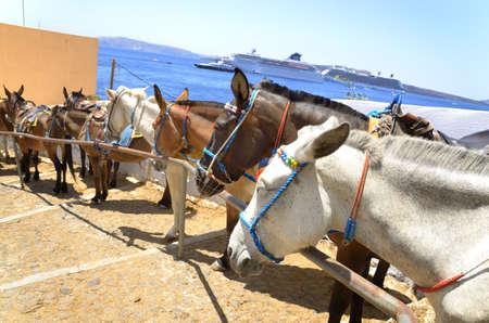 insolación: Un grupo de burros está a la espera para los turistas para subir a la aldea