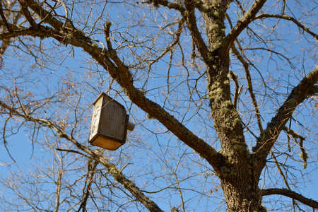 Birdhouse hanging from a tree branch  photo