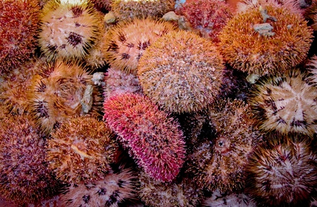 stingy: Sea urchin Stock Photo