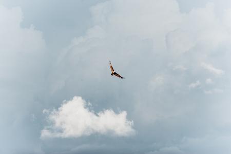 Alone sea hawk flying in the sky.
