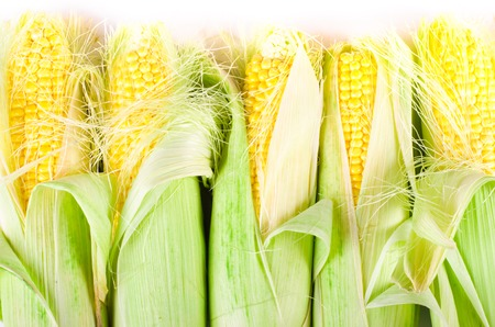 corn rows: Ears of corn isolated on a white background. Frame