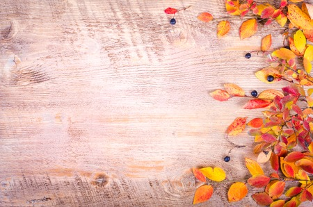 Autumn leaves over wooden background with copy space. Fall and thanksgiving setting. Autumn composition.