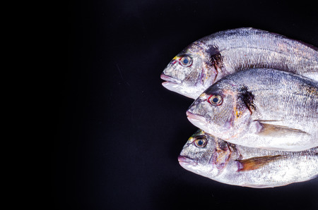 gilthead: Fresh raw gilthead fishes on black background. Healthy food concept. Food frame.