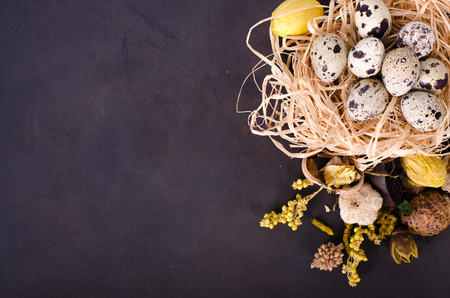 quail nest: Quail nest with spotted eggs, dried plants on a dark background Stock Photo