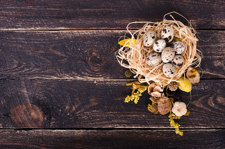 quail nest: Quail nest with spotted eggs, dried plants on a wooden  background. Free space for your text. Stock Photo