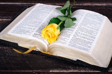 Yellow rose on top of an old Bible Stockfoto