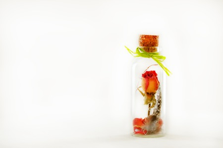 Dried flowers, plumelet, rose in aroma dropper bottle on white background, Herb-infused oil. Copyspace.