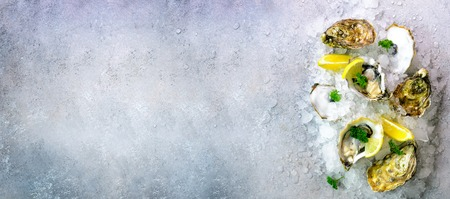 Fresh opened oysters, lemon, herbs, ice on concrete stone grey background. Top view, copy space. Banner