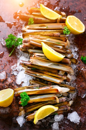 Bundle, bunch of fresh razor clams on ice, dark concrete background, lemon, herbs. Copy space, top view
