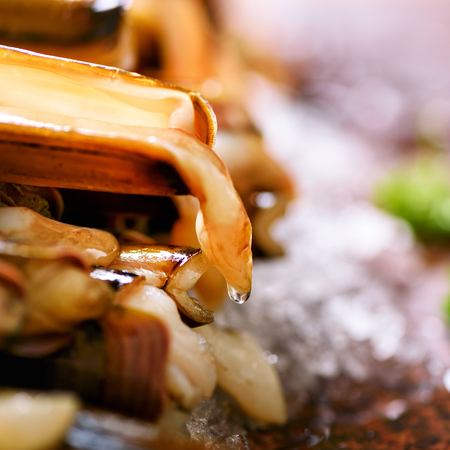 Fresh raw bamboo clam on ice, grey concrete background. Top view, copy space Stock Photo
