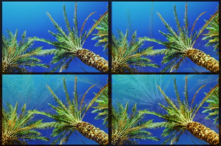 Glitch effect due to photo processing on an image with palms and ocean.