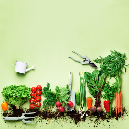 Organic vegetables and garden tools on green background with copy space. Square crop. Top view of carrot, beet, pepper, radish, dill, parsley, tomato, lettuce. Vegan, eco concept