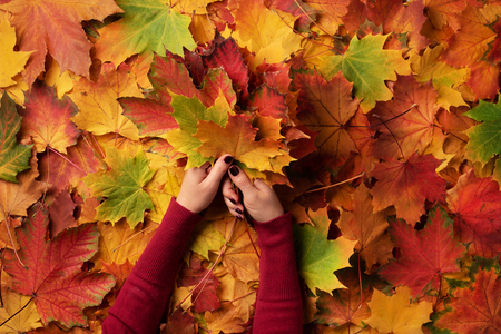 Bunch of colorful maple leaves in female hands with red nails design. Bright autumn background. Sunny day, warm weather. Top view. Banner. Standard-Bild - 111718816