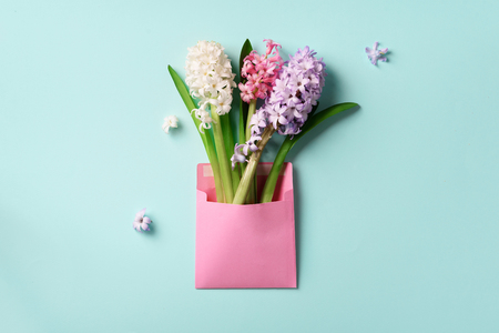 Spring hyacinth flowers in pink postal envelope over blue