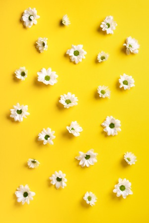 Daisy pattern. Top view. Flat lay. Floral pattern of white chamomile flowers on yellow background. Summer concept.