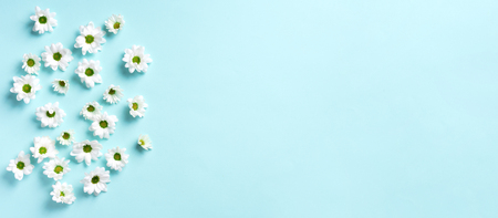 Daisy pattern. Top view. Flat lay. Floral pattern of white chamomile flowers on blue background. Summer concept. Banner.
