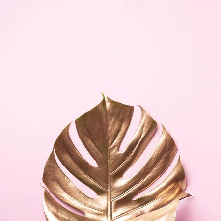 Pozłacane liście monstery tropikalnej palmy na modnym różowym żywym kolorze koralowym. Pusta przestrzeń, miejsce na tekst, kopiowanie, napis. Błyszczące piękno, koncepcja mody.