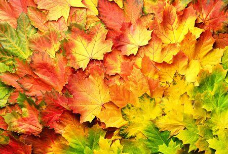 Bunter Herbstlaubhintergrund mit Kopienraum. Gemütliche Herbststimmung. Saison- und Wetterkonzept, leichtes Bokeh.