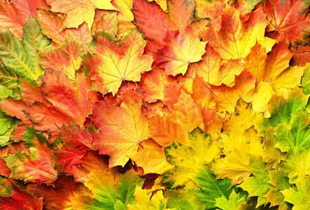 Colorful autumn leaves background with copy space. Cozy fall mood. Season and weather concept, light bokeh.