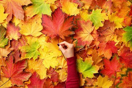 Esdoornblad in meisjeshanden. Abstracte herfst achtergrond. Kopieer ruimte voor reclame. Zonnige dag, warm weer, herfstconcept. Bovenaanzicht. Banier.