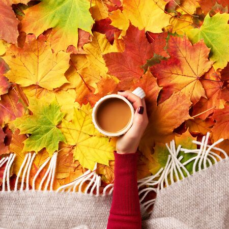 Autumn flat lay. Female hands with cup of coffee over colorful maple leaves background. Top view. Season concept.