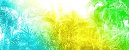 Tropische Palmblätter mit Sonnenleckeffekt. Blumenmuster im trendigen Regenbogensteigungshintergrund. Banner, Kopienraum. Exotisches Palmen-Bokeh, getönt in Neonfarben. Sommer-, Urlaubs- und Reisekonzept.