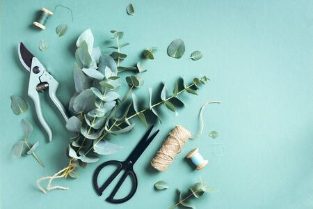 Eucalyptus bouquet creating with baby blue eucalyptus branches over green background. Florist work concept. Top view. Flat lay Reklamní fotografie