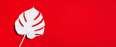 Summer composition. White tropical palm leaves on red background. Summer concept. Flat lay, top view, copy space.