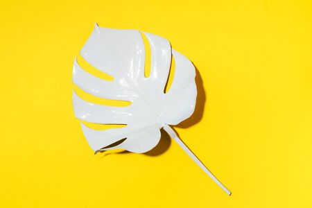 White painted monstera tropical leaf on yellow background. Summer minimal concept Фото со стока