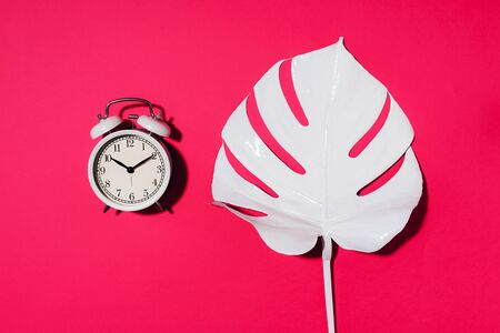 White alarm clock and monstera leaf over pink background with copy space. Top view. Flat lay. Wake up alert concept. Morning routine