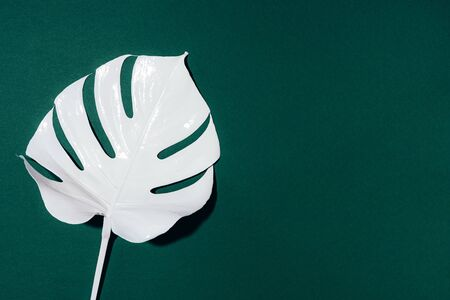 White painted monstera tropical leaf on green background. Summer minimal concept Фото со стока